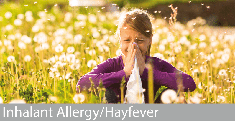 Home Remedies For Dogs With Hay Fever